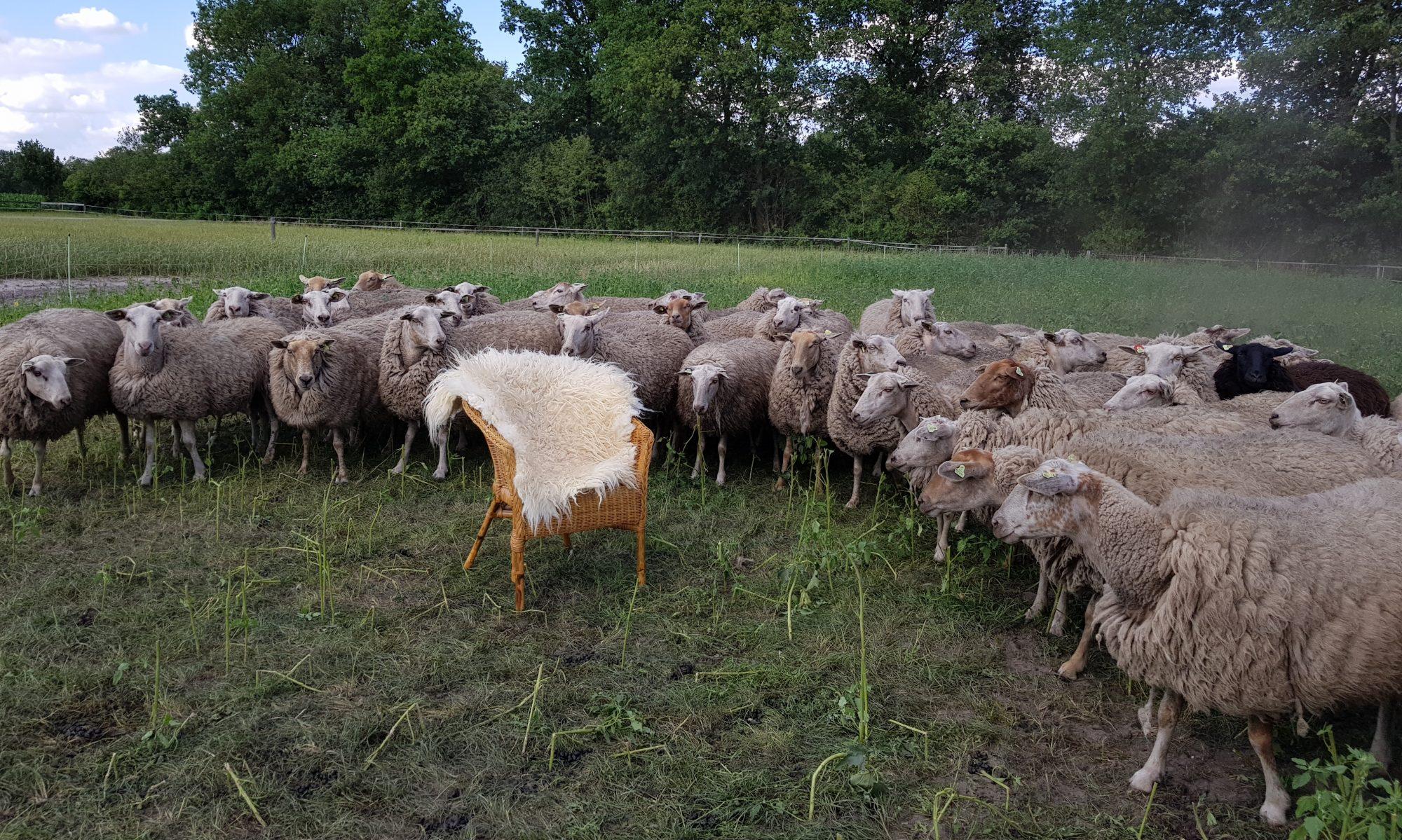 Wild van Maashorstwol